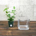 【器】 ガラス ブロックLL(100) ハイドロカルチャー 向き