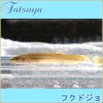 ホトケドジョウ 10匹 川魚