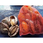 愛媛特産品・産地直送 宇和海産 活アワビ5個&活ヒオウギ貝10個・約700g前後〜1.5kg前後セット
