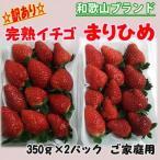 訳あり 完熟イチゴ まりひめ 350g×2パック ご家庭用【クール便】 いちご 苺 フルーツ スイーツ