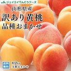 【予約商品】黄桃 桃 訳あり 品種おまかせ 約2kg (玉数おまかせ) 山形県産 もも ご自宅用 JAグループ pc06