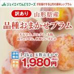 すもも 訳あり プラム 品種おまかせ 約1.2kg (玉数おまかせ) 山形県産 スモモ ご自宅用 i01