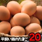 卵 平飼い 鶏卵 産みたて卵 兵庫県産 20個入り