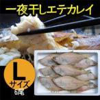 一夜干しエテカレイ Lサイズ(6尾) 干物 兵庫県香住漁港産