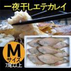 一夜干しエテカレイ Mサイズ(約7尾以上) 干物 兵庫県香住漁港産