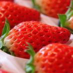 いちご フルーツ 高級ブランドいちご 苺 15粒 詰め合わせ ギフト 化粧箱入り 兵庫県産