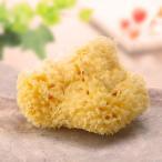 天然海綿ボディスポンジ・ハニコム種  (約11-12cm)