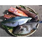 下処理済み! 新鮮!便利!美味!季節感あり! 春本番から初夏まで 若狭の季節の鮮魚セット