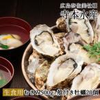 広島牡蠣老舗の味! むき身500g殻付き20個[生食用]