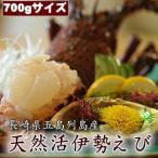 Shrimp - 天然活伊勢海老(えび) 700g 約3〜4人前