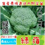 緑嶺 4株入りパック ブロッコリー苗 野菜苗 ガーデニング 家庭菜園 10P12Oct15