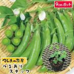 つるありスナックエンドウ苗 9cmポット 野菜苗 ガーデニング 家庭菜園 10P12Oct15