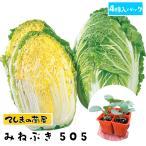 【生産農場直送】ハクサイ苗 みねぶき505  4株入りパック 白菜 葉菜苗 【人気】