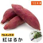 採れたて生産農場直送 さつまいも苗(イモヅル) 紅はるか1束10本入り サツマイモ