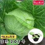 金系201号キャベツ苗 9cmポット 野菜苗 ガーデニング 家庭菜園 10P12Oct15