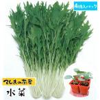 【生産農場直送】ミズナ苗 水菜 4株入りパック 葉菜苗 【人気】