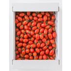 (送料込み) (産地直送)熊本県産アイコトマト 3kg ミニトマト とまとリコピン(期日指定できません)