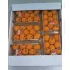 愛媛県産 びわ Mサイズ 5パック|15339:フルーツ・果物