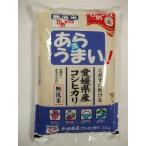 無洗米 あらうまい 愛媛県産 コシヒカリ 5kg   4908729020018 令和2年産 (送料込み) 米 ひめライス  こしひかり