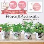 【Ti Amo】HANA&ANIMALS/陶器ポット植物栽培セット/選べるメッセージカード付き/誕生日/イチゴ/クローバー/バラ/ビオラ