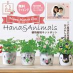 【Ti Amo】HANA&ANIMALS/陶器ポット植物栽培セット/写真入り選べるメッセージカード付き/誕生日/イチゴ/クローバー/バラ/ビオラ