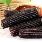 常温 真空 【 黒糯玉米 】  黒玉米  1本 玉米 粘玉米  とうもろこし トウモロコシ ワキシーコーン 農作物  粘苞米 苞米