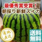 品評会で最優秀賞を受賞!名産地熊本県植木町の絶品スイカ