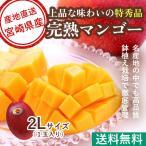 マンゴー フルーツ Fruits 母の日 ギフト 特秀 宮崎マンゴー 贈答用1玉 2Lサイズ 350g以上 産地直送 送料無料