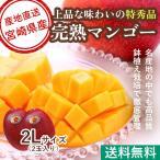 マンゴー フルーツ Fruits 母の日 ギフト 特秀 宮崎マンゴー 2Lサイズ 350g以上 贈答用2玉入り 産地直送 送料無料