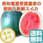 スイカ フルーツ Fruits 小玉スイカ 2Lサイズ2.3kg〜2.7kg 2玉 千葉県富里産 県知事賞受賞農家の秋西瓜
