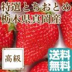 いちご とちおとめ 完熟 フルーツ fruits 栃木県真岡産 ギフト 特選 2Lサイズ30粒 贈答用2パック入り 1パック約400g 送料無料