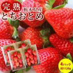 いちご とちおとめ フルーツ Fruits 完熟いちご 栃木県真岡産 送料無料 産地直送 4パック入り 1パック約280g×4