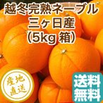 越冬完熟 ネーブル オレンジ みかん 柑橘類 フルーツ fruits 5kg箱 静岡県三ヶ日産 産地直送 送料無料