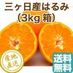 はるみ 3kg フルーツ fruits 静岡県 三ヶ日産 みかん 柑橘類 産地直送 送料無料 贈答用