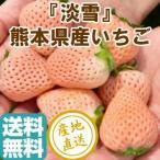 いちご フルーツ fruits 淡雪 白いちご 完熟 2パック入箱 約500g 産地直送 送料無料 熊本県産