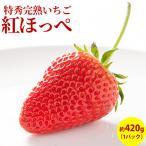 いちご フルーツ fruits 紅ほっぺ 完熟 特選 贈答用1パック入箱 約420g 産地直送 送料無料 人気 ギフト