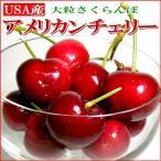 さくらんぼ アメリカンチェリー 約500g アメリカ産 サクランボ 桜ん坊 父の日 お中元 ギフト プレゼント 夏