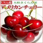 さくらんぼ アメリカンチェリー 約800g アメリカ産 サクランボ 桜ん坊 お中元 ギフト プレゼント フルーツ