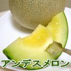 メロン 訳あり アンデスメロン 4〜7個入り 送料無料 熊本・茨城・山形産 緑肉メロン ネットメロン お取り寄せ 規格外 少し外観が落ちます