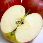 りんご シナノドルチェりんご 約10kg 中玉 36〜40個入り 長野産|糖度14〜15度 林檎 リンゴ アップルジュース 信州りんご