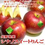 お試し 送料無料 訳あり シナノスイートりんご 約 5kg 小玉 23〜25個入り  長野産 「信州りんご」  甘いリンゴ アップル