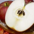 りんご サンつがるりんご 約10kg 小玉 46〜50個入り 青森産|10キロ 津軽 林檎 アップル リンゴ