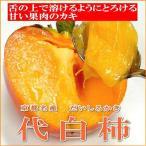京都名産 代白柿 だいしろかき 大玉 8個入り やわらかいカキ kaki