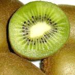送料無料 国産 グリーンキウイフルーツ 緑肉 約1kg 2S 13個前後入り 訳あり 送料込 規格外のキウイのため大きさにばらつきがあります