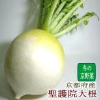 だいこん 京野菜 京都府産 聖護院大根 しょうごいんだいこん 大玉 2Lサイズ 6個 伝統野菜 京やさい