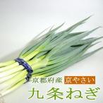 ねぎ 九条ネギ くじょうねぎ  24本前後入り 京都産  京野菜 京都伝統野菜 京やさい 葱
