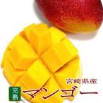 完熟マンゴー 特大 4Lサイズ 1玉 簡易箱 宮崎産 |母の日 父の日 宮崎土産 アップルマンゴー mango ギフト プレゼント