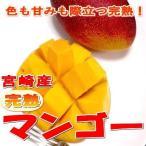 マンゴー  完熟マンゴー 超大玉 5Lサイズ 1玉 約650g 化粧箱 宮崎産|希少品 かんじゅく プレゼント 父の日 ギフト アップルマンゴー プレゼント