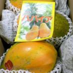 パパイア 3〜4個入り 約2kg(サンライズソロ種)宮崎産|国産「蕃瓜 木瓜 万寿果」フルーツパパイヤ ぱぱいや ぱぱいあ