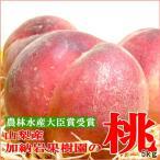 もも 加納岩果樹園の桃 約5kg 大玉 15〜16個入り 第一回農林水産大臣賞受賞 山梨産 モモ 白鳳 白桃 ピーチ